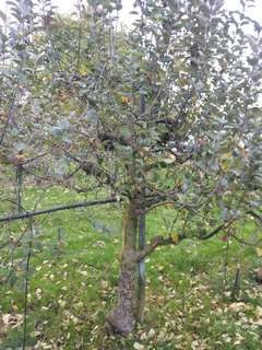 Quel arbre taille en hiver - Calendrier taille arbres fruitiers ...